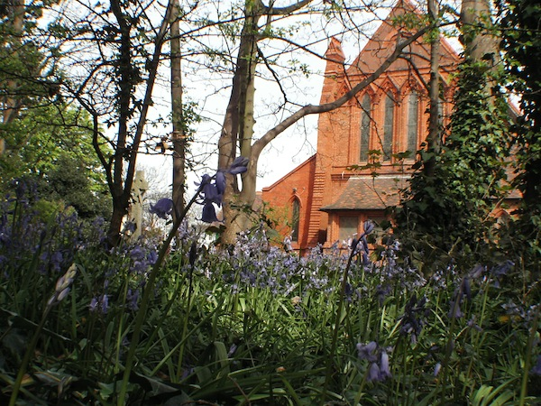 St Hildeburgh's viewed through the bluebells