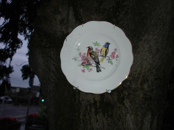 plate in tree