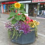 Hoylake in Bloom: Latest news