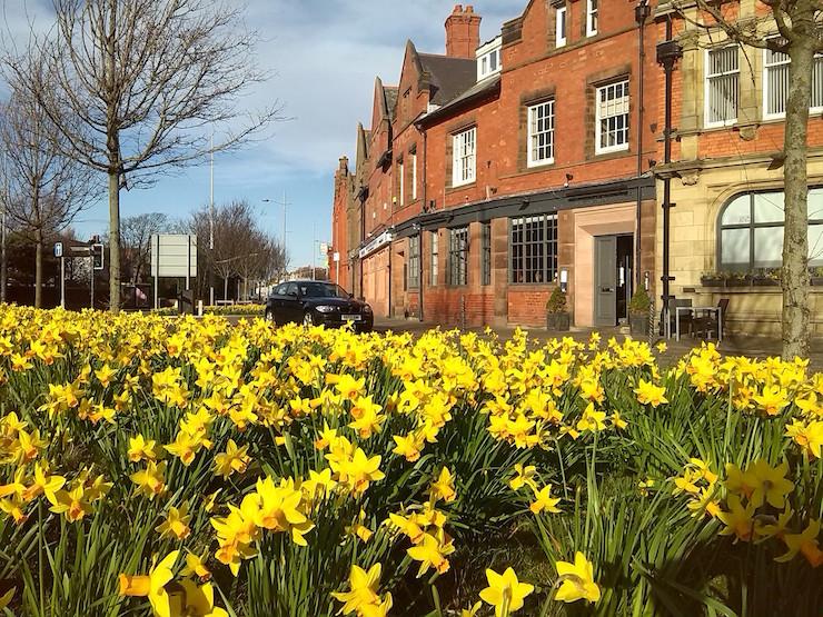 quadrant daffodils
