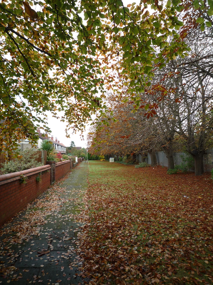 grosvenor road trees